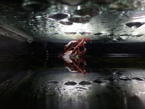 レッドルブラ水面から突き出し。