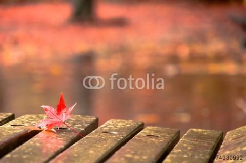 秋雨と紅葉。
