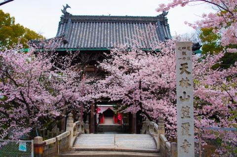 2016桜。