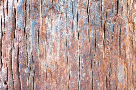 伊勢神宮 外宮 杉の木 つるつる。