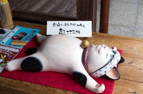 おかげ横丁 満腹 猫。