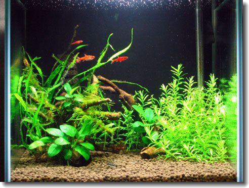水草1ヶ月